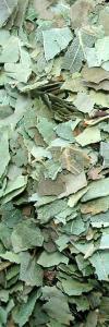 Birkenblätter geschnitten Bio