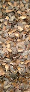 Kakaoschalen Bio