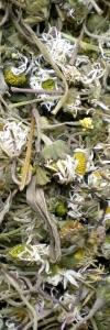 Gänseblümchen geschnitten Bio